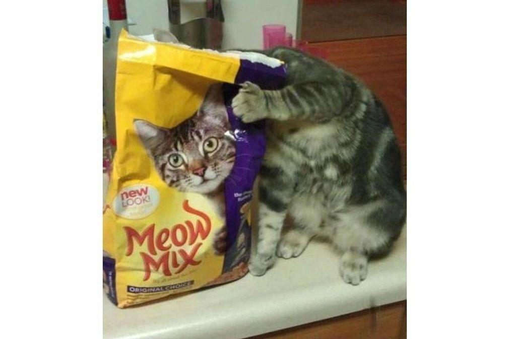 30 vidéos de chats drôles et mignons à regarder en boucle !