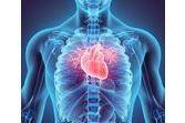 Zoom sur le fonctionnement du cœur