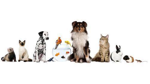 Quel animal choisir ?