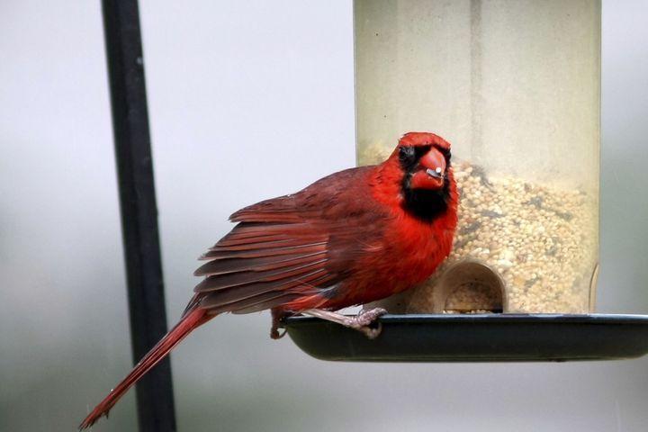 aliments à ne pas donner à votre oiseau