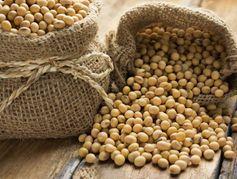 Cancer des os : le soja pourrait améliorer le traitement post-opératoire