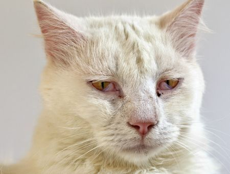 Comment savoir si votre chat est en fin de vie ?