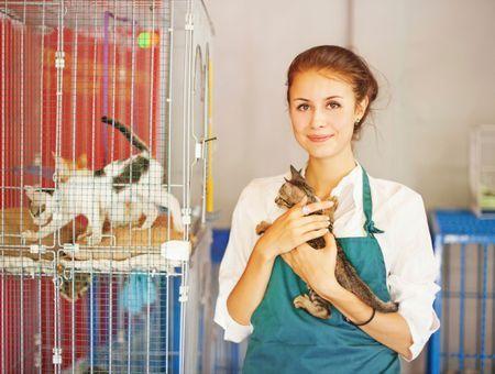 Adoption d'un chat : que faire en cas de litige avec l'éleveur, le donateur ou un voisin ?