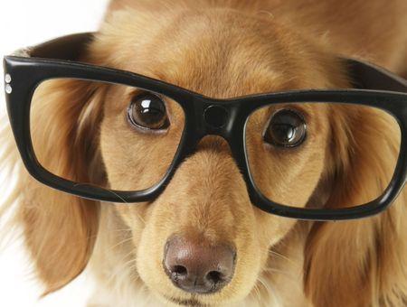 Comment distraire son chien et développer son intelligence ?