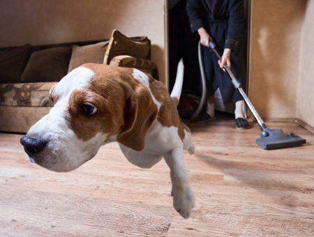 Habituer son chien aux bruits du quotidien