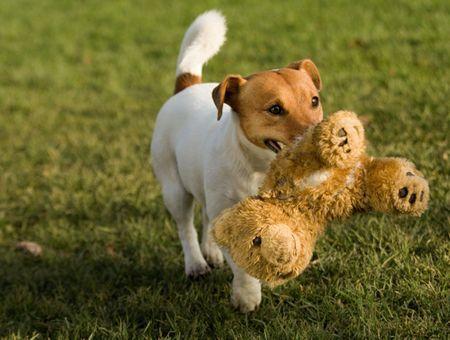 Apprentissage du chien par le jeu
