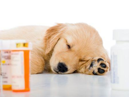 Médicaments pour mon chien