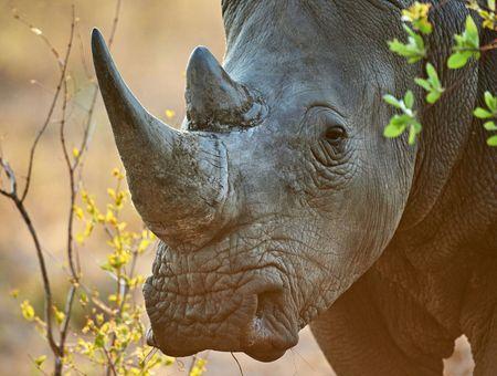 Le commerce d'animaux sauvages provoque un déclin de 62% des espèces menacées dans le monde