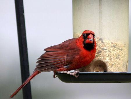 Régime alimentaire : les aliments à ne pas donner à votre oiseau