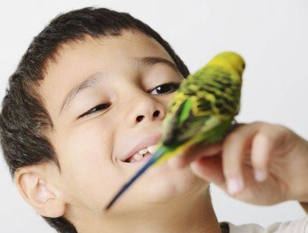 Apprendre à siffler et à parler à son oiseau