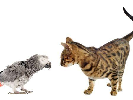 Attaque de prédateur : quels sont les prédateurs des oiseaux ? Comment soigner un oiseau attaqué
