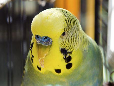 Comment reconnaître un oiseau malade ?
