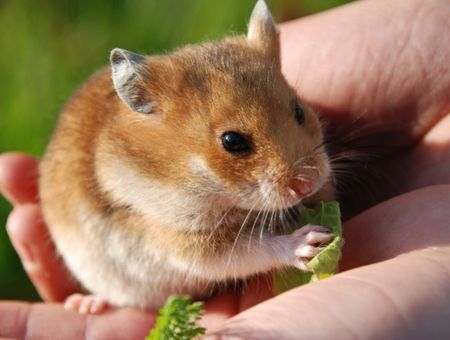 Prendre soin de son hamster