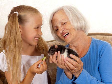 Comment bien accueillir un rat domestique?