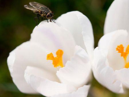 Comment se débarrasser des mouches et moucherons ?