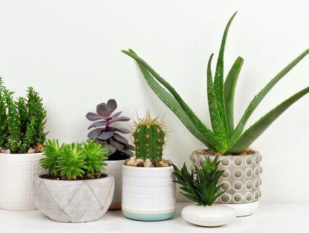 Télétravailleurs, voici les plantes qui doivent orner votre bureau pour booster votre productivité !
