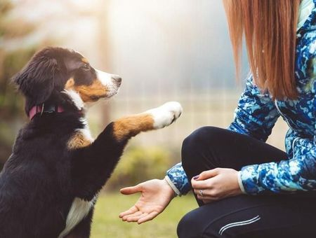 L'adolescent et l'animal domestique : une relation forte
