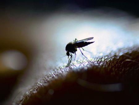 Pourquoi j'attire toujours les moustiques ?