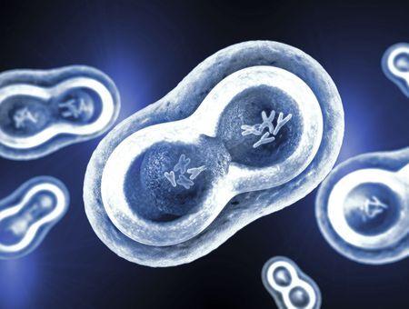 Chromosomes sexuels X et Y : pourquoi certaines maladies ne touchent qu'un seul sexe ?