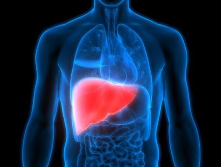 Hépatite E : modes de transmission, symptômes et traitements