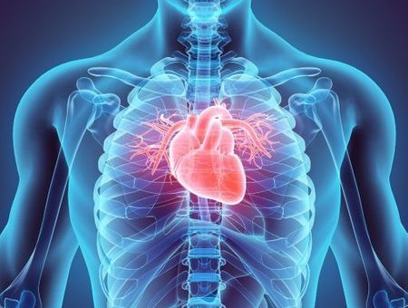 Le cœur : son fonctionnement, son rôle et ses maladies