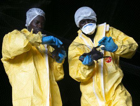 Covid 19 : le réchauffement climatique pourrait avoir joué un rôle dans la pandémie