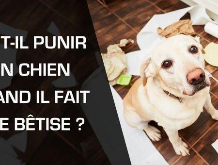 Faut-il punir un chien quand il fait une bêtise ?