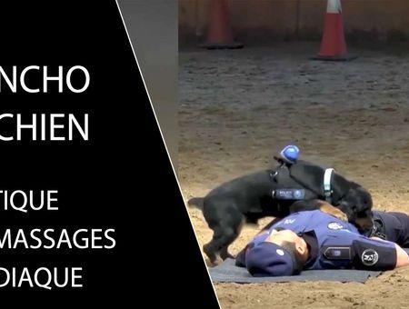 Découvrez Poncho, le chien qui sait faire les massages cardiaques