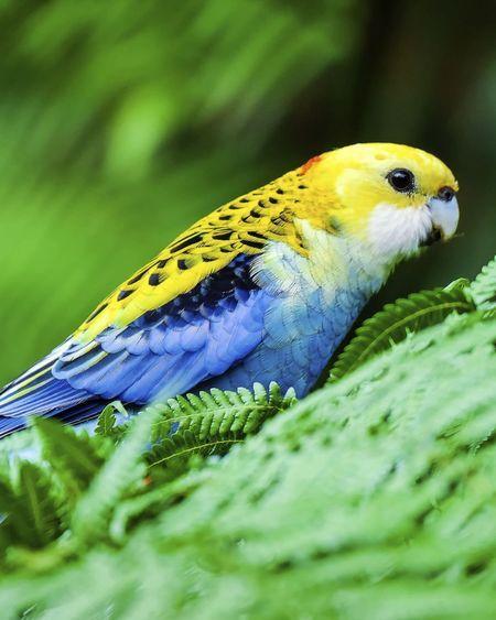 Gare aux plantes toxiques pour les oiseaux