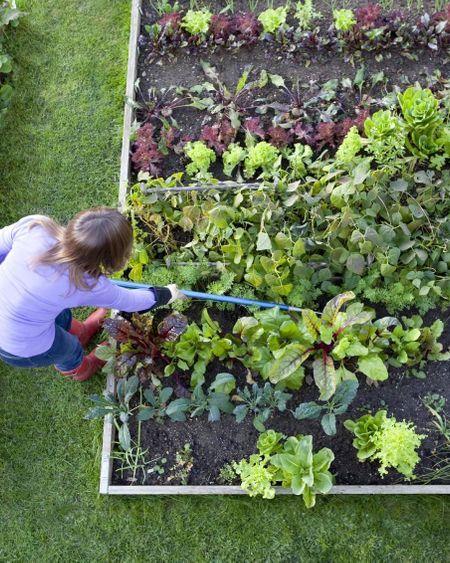 Les Français devenus accros au jardinage pendant le confinement