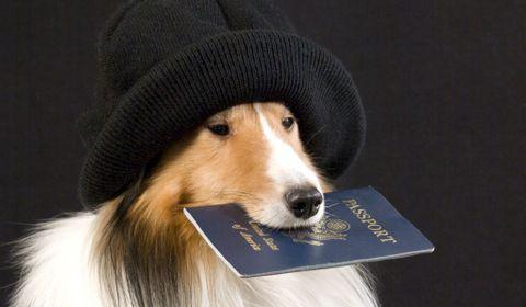 chien à l'étranger