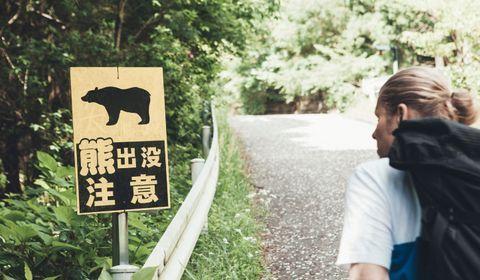 Quand les japonais créent un robot-loup pour se protéger des ours