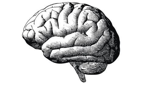 l'origine de l'intelligence