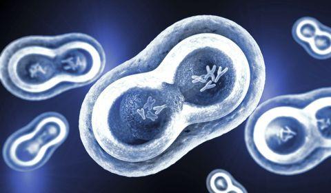 chromosomes-sexuels-x-y