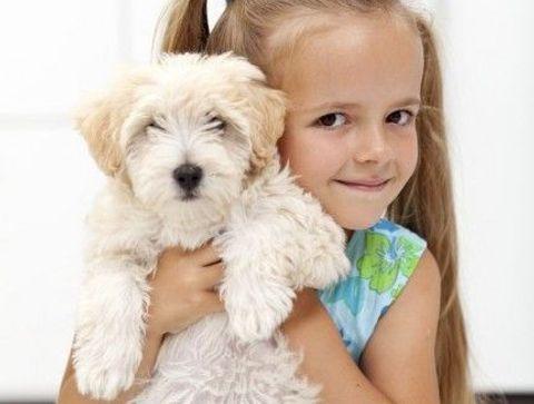 Les maladies transmises par les chiens
