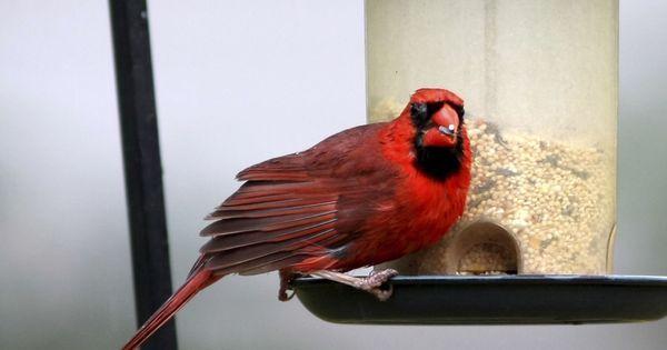 Regime Alimentaire Les Aliments A Ne Pas Donner A Votre Oiseau