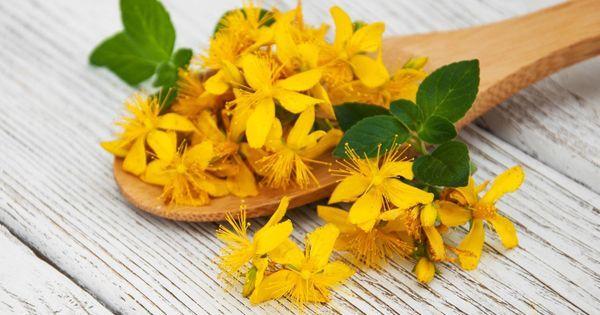 St. John's Wort: properties, benefits, uses of this natural antidepressant