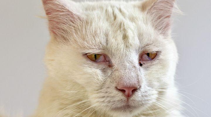 fin de vie du chat