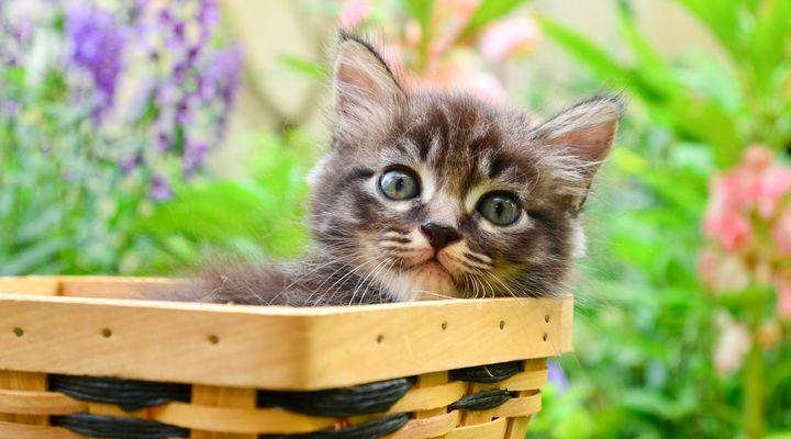 adoption d'un chaton