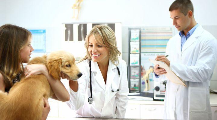 première visite vétérinaire