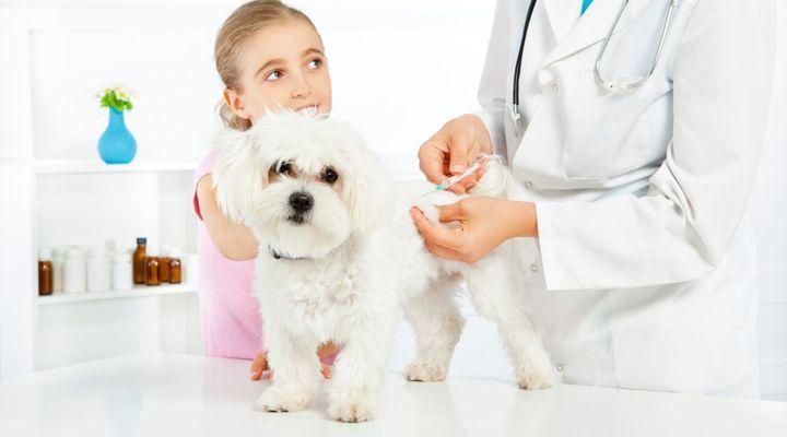 analyse à un chien