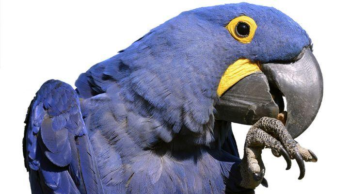 coupe des griffes des oiseaux