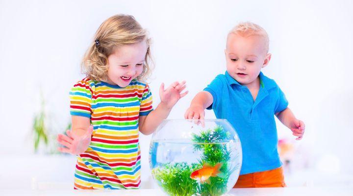 Problèmes de pigmentation du poisson