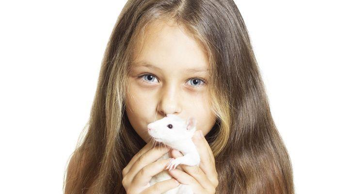 comportement du rat domestique