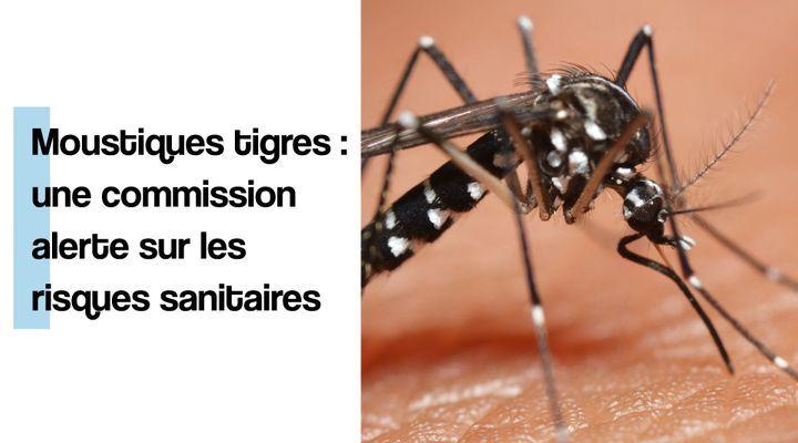 Moustiques tigres : une commission alerte sur les risques sanitaires