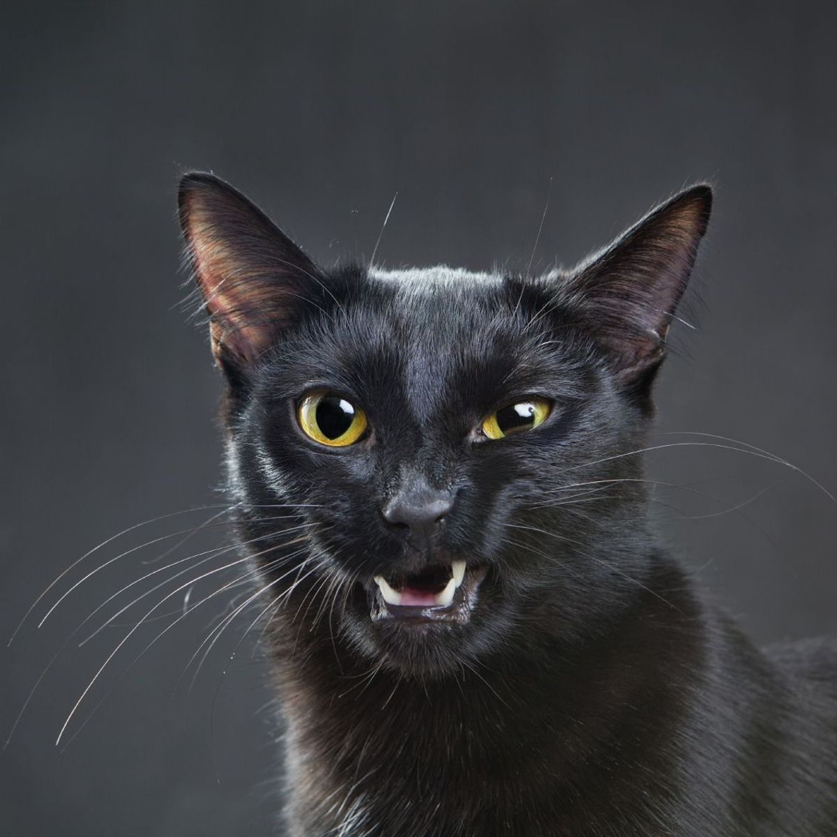 Goûter une chatte qui mouille
