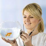 Santé des poissons