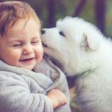 Bébé et les animaux familiers