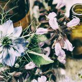 Phytothérapie et grossesse : quelles plantes pour soulager les petits maux ?