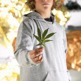 Cannabis : comment agit-il sur notre organisme ?